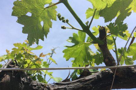 山の上ワイン会 イベント🎵